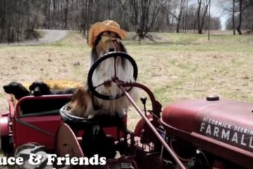 chien au volant d un tracteur